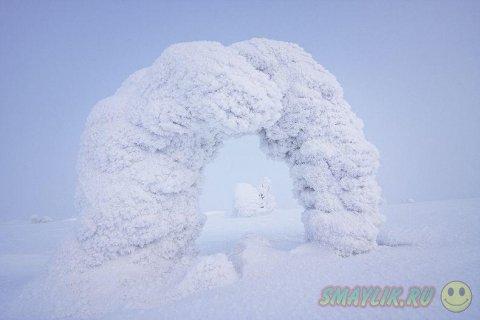 Удивительно красивые снежные скульптуры созданные природой