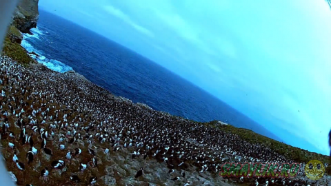Потрясающие снимки о жизни колонии пингвинов