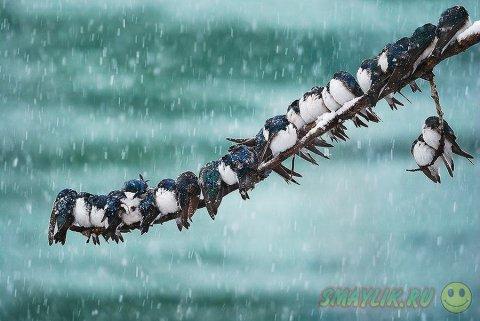 Снег, морозная свежесть и царство зверей
