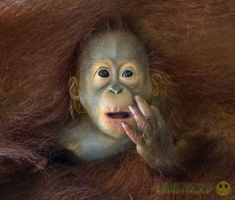 Самые интересные фотографии конкурса «Sony World Photography Awards 2014»
