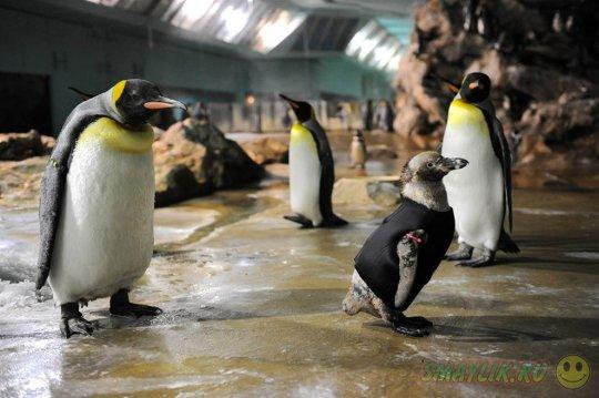 Пингвины в зоопарке Скарборо впали в депрессию из-за погоды