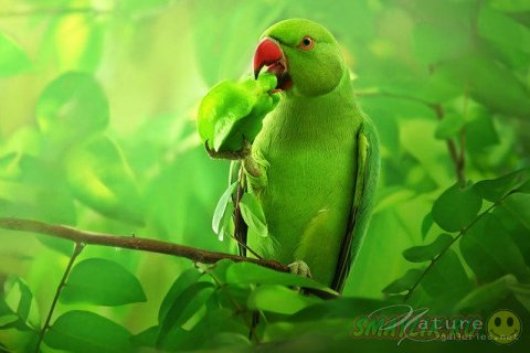 Естественная красота диких животных от Сомпоб Саси-Смита