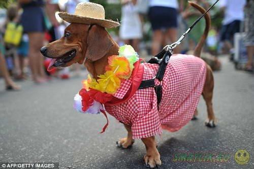 Ежегодный карнавал для животных в Бразилии