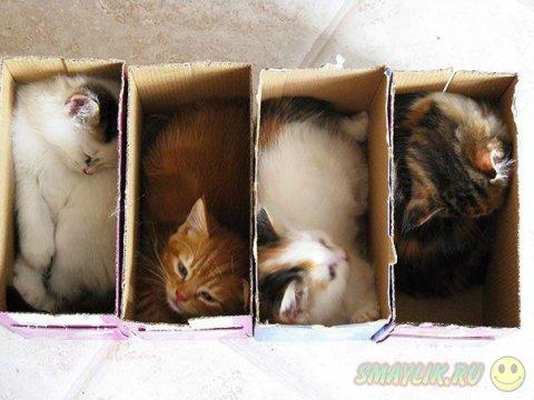 Кошки в самых неожиданных местах