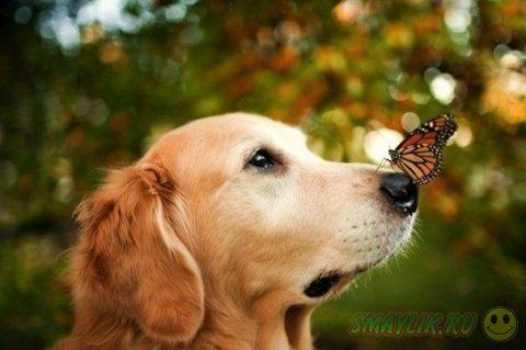 Фотопроект «Счастливая собака» от Candice Sedighan