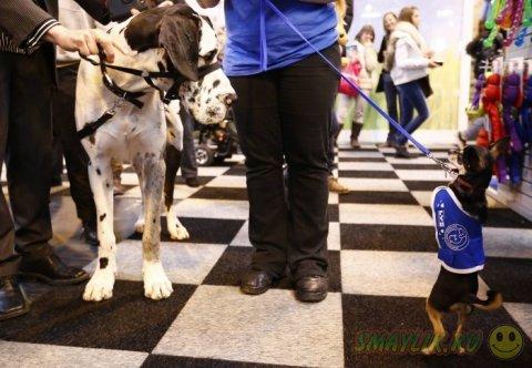 Ежегодная выставка собак в Бирмингеме