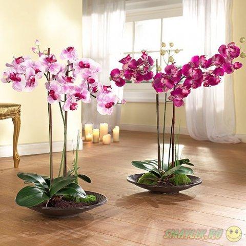 Изысканные цветы - орхидеи