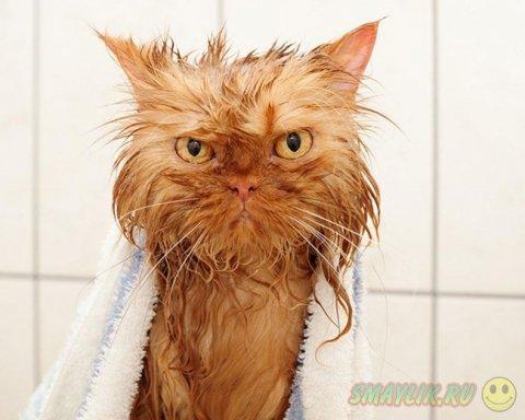 Коты во время купания