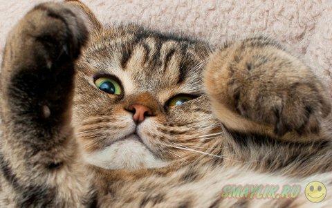 Удивительные создания эти кошки
