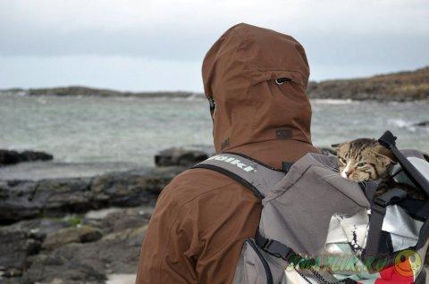 Котенок, путешествующий в рюкзаке