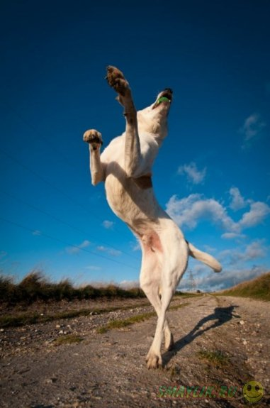 Собаки во время прыжка