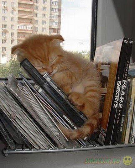 Кошки порой спят в самых необычных местах