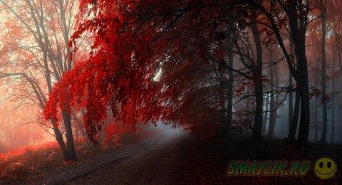 Яркие краски леса в работах чешского фотографа