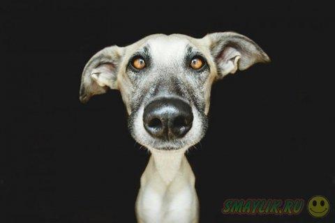 Подборка самых ярких фотопортретов собак от Эльке Фогельзанг