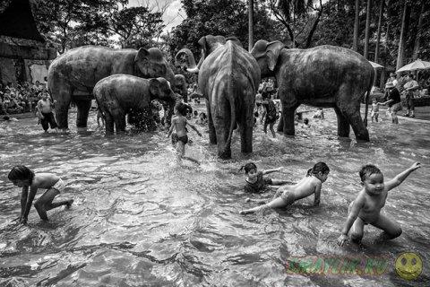 Победители конкурса от World Photography Organisation