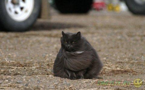 Сказочный кот Сигмонд Серый