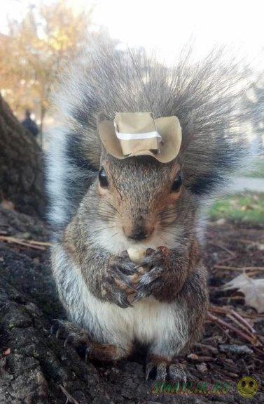 Маленькие смешные шляпки бельчихи Снизи
