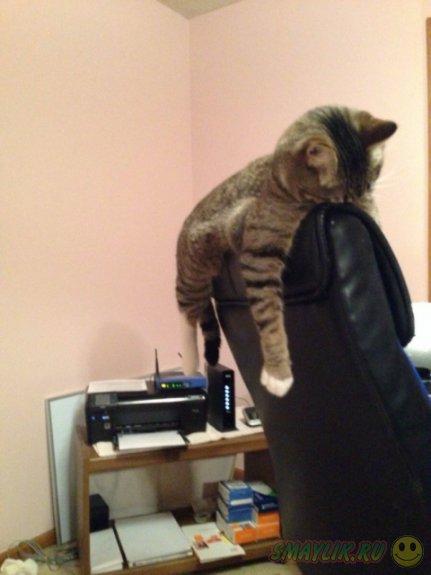 Кошки могут спать где хотят и как хотят