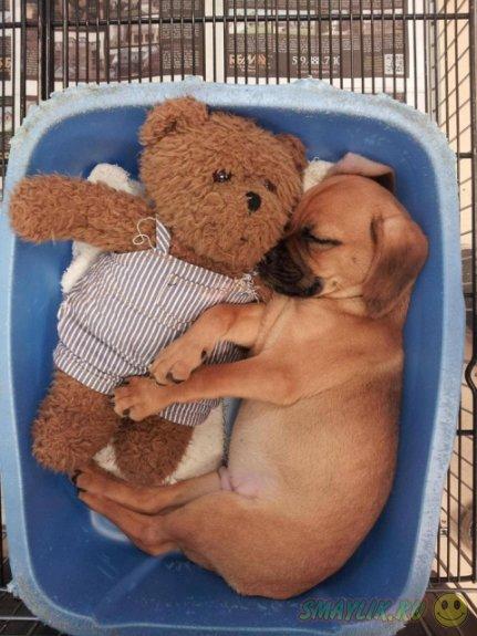 Восхитительные спящие щеночки