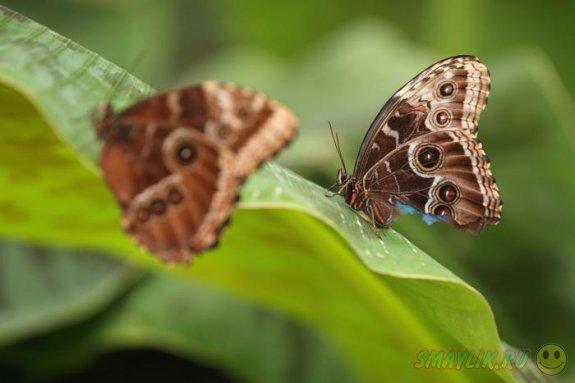 Удивительный мир бабочек в лондонском Музее естественной истории