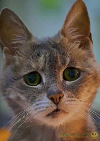 Подборка очаровательных печальных котов