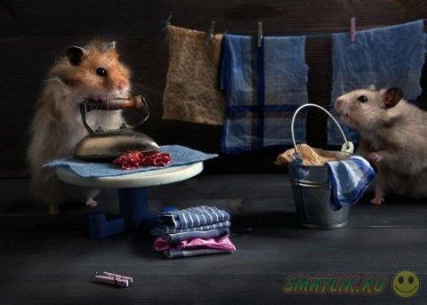 Увлекательная жизнь хомячков