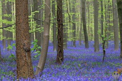 Весенние краски природы