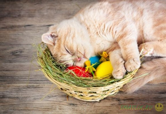 Милые пасхальные коты