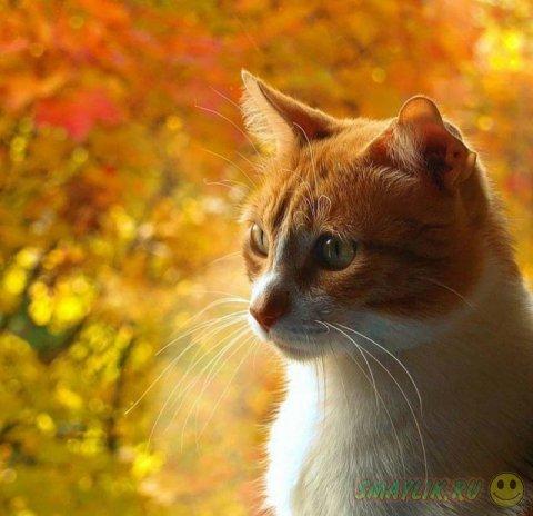 Кошки с солнечным окрасом