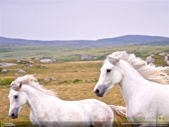 Прекрасные минуты спокойствия и умиротворения в фотографиях от National Geographic