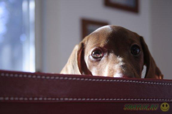 Даже самый неугомонный щеночек может загрустить
