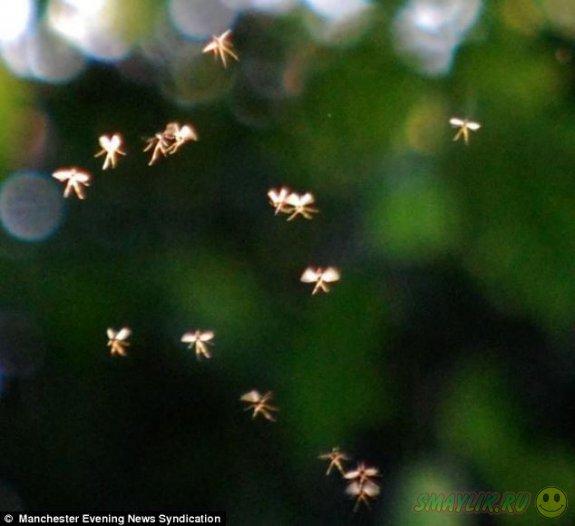 Джон Хаят сфотографиовал летающих фей в долине Россендаль