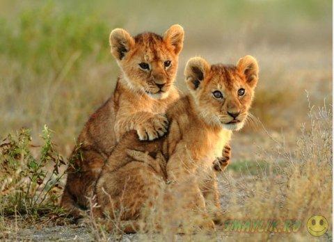 Лучшие снимки за апрель от National Geographic