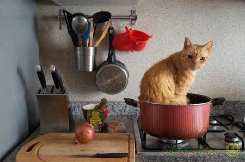 Домашние животные и повседневные предметы