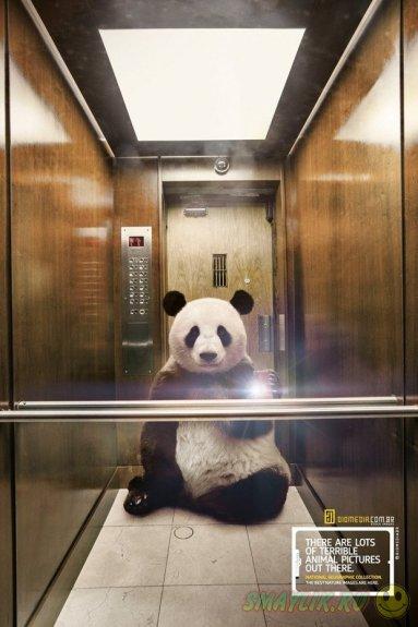 Селфи в исполнении панды, медведя и кунгуру