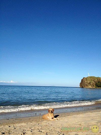 Домашние животны на пляжном отдыхе