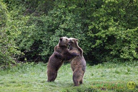 Лучшие фотографии о жизни в мире животных за неделю
