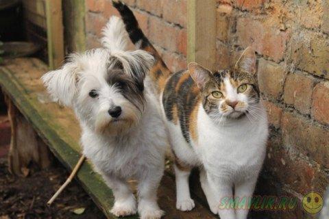 Необычная дружба домашних животных