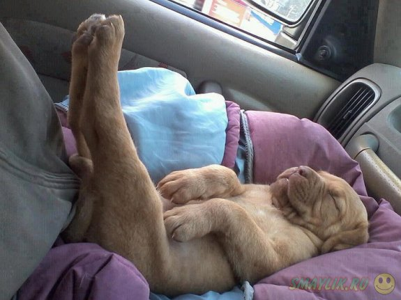 Забавные позы  спящих собак