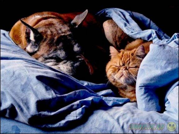 Любители кошек умнее тех, которые считают себя «собачниками»