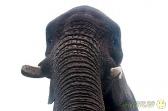 В британском сафари-парке слониха Латаби сделала «селфи» на потерянный iPhone