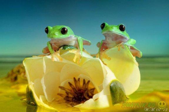 Невероятный и заманчивый мир  лягушек