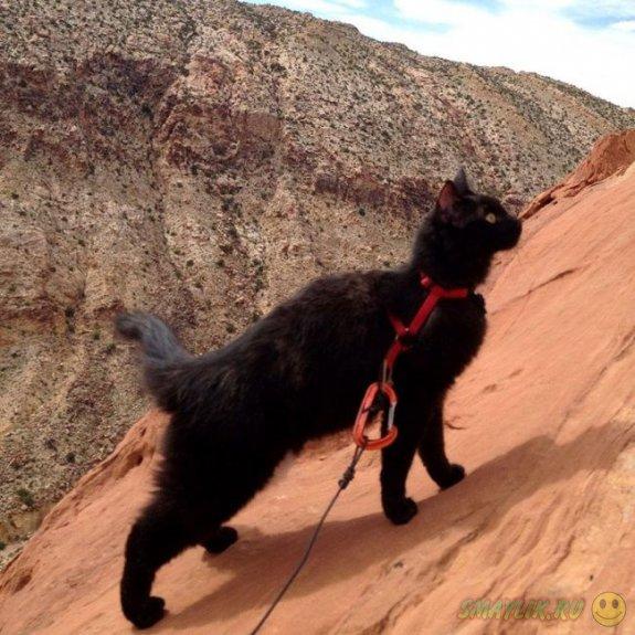 Кошка Милли — любительница гор и высоты
