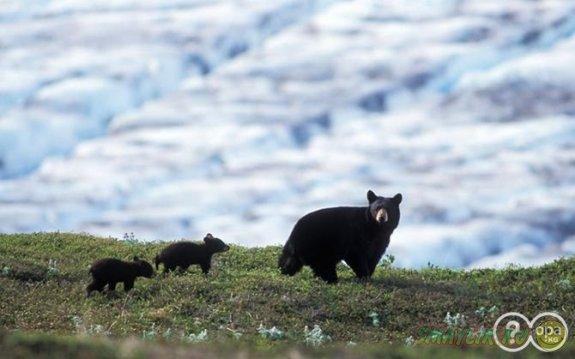 В США медведи решили позавтракать в детском лагере