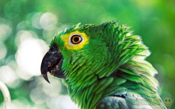 В городе Фэрфакс потерявшегося попугая попутали со школьником