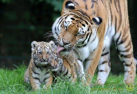 Лучшие фотографии животных за последнюю неделю