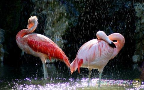 Животные во время дождя