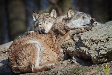 Подборка милых фотографий спящих животных