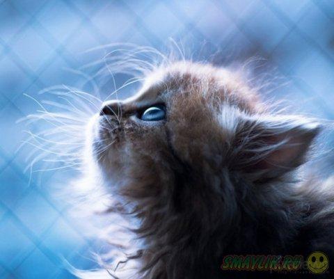 Жизнь маленького рыженького котенка в фотографиях от Бенджамина Тороде