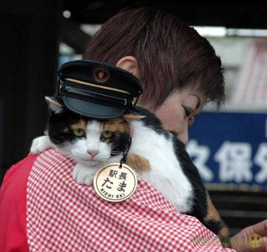 В Японии животные официально работают на железнодорожной станции